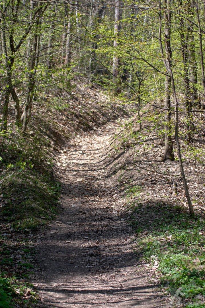 Dolina Kobylańska - Ścieżka z parkingu przy drodze do Będkowic
