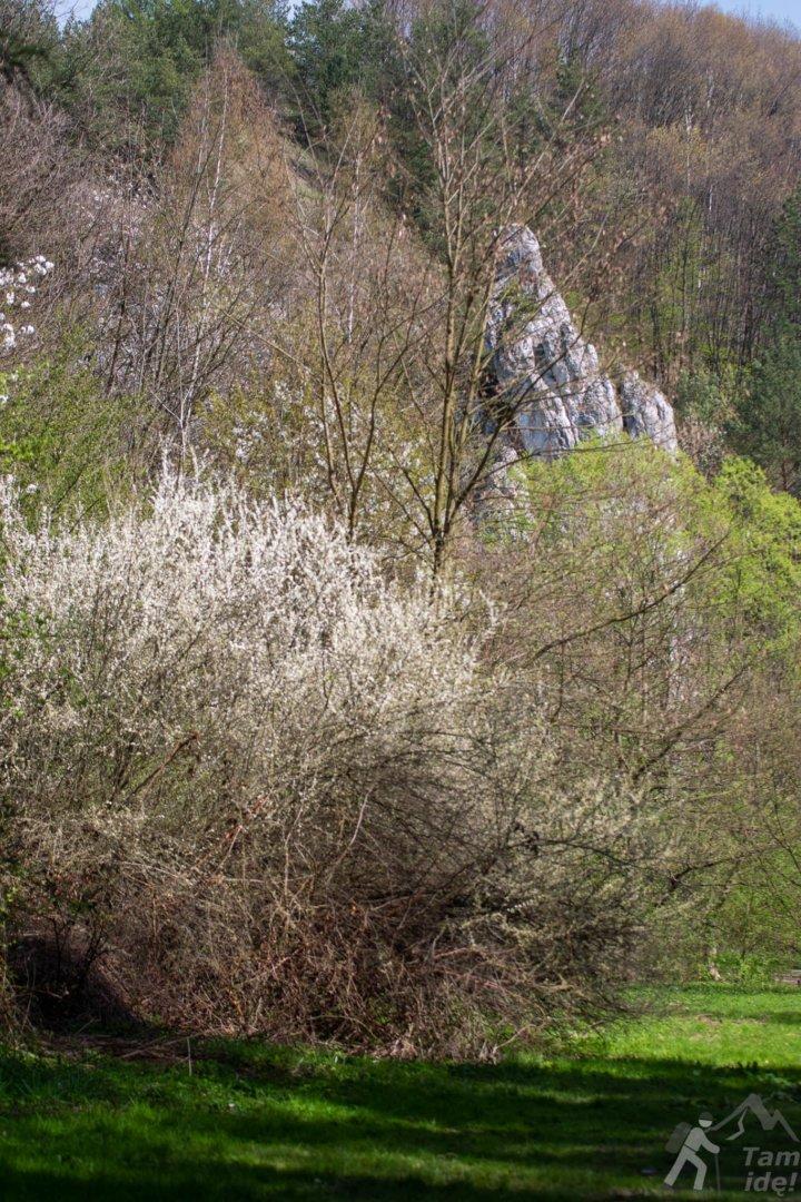 Szczyt Mnicha w Dolinie Kobylańskiej otoczony drzewami