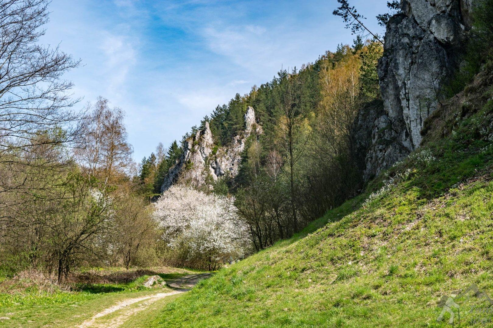 Dolina Kobylańska wiosną
