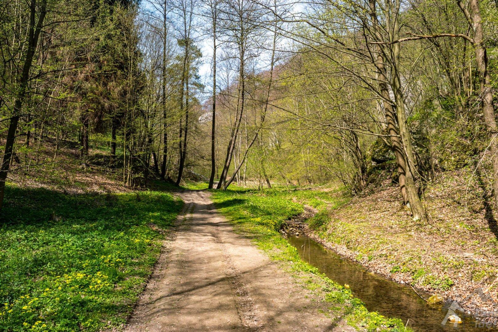 Szlak wzdłuż potoku Kobylanka