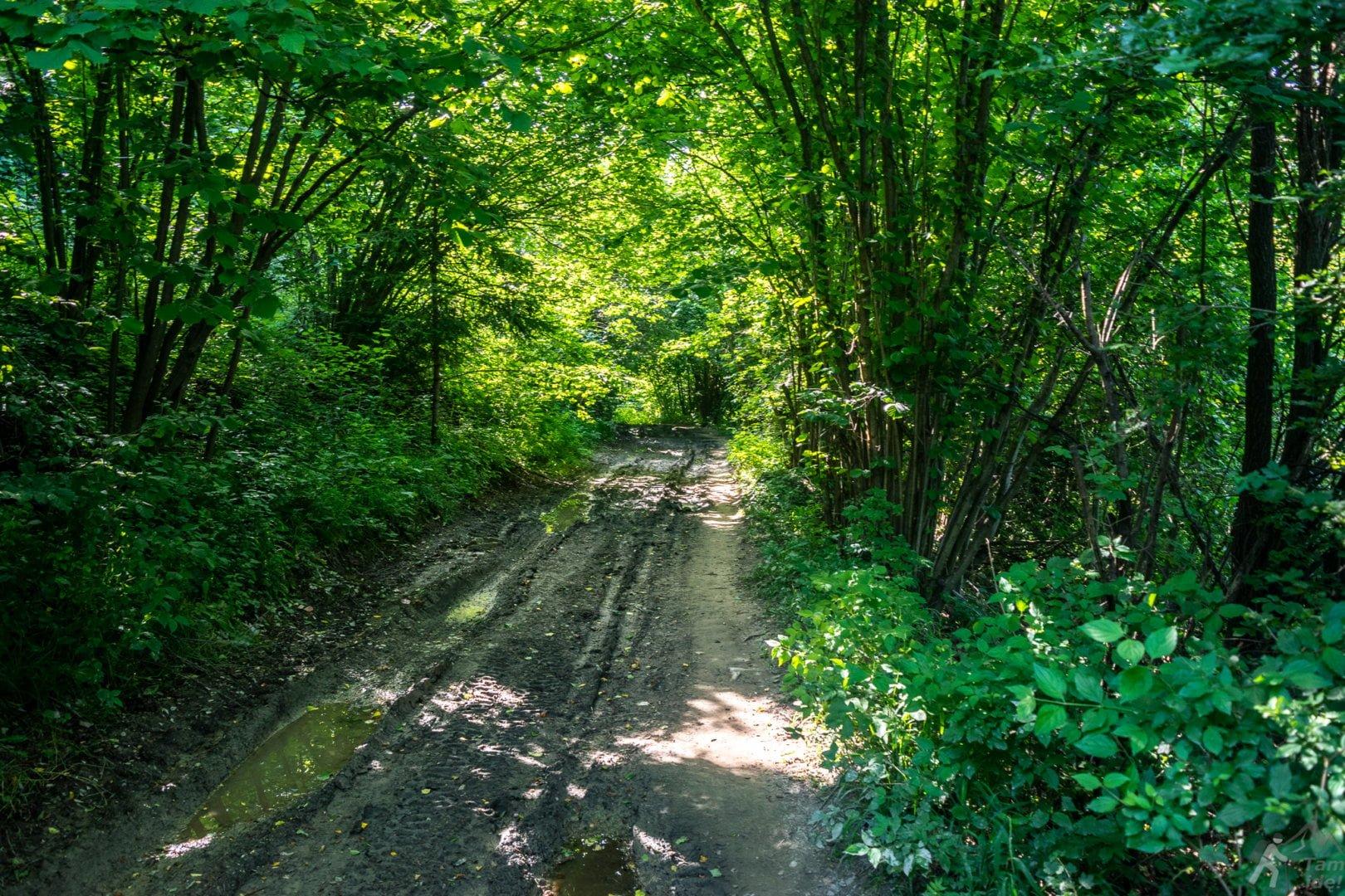 Szlak Żółty do Leśnicy